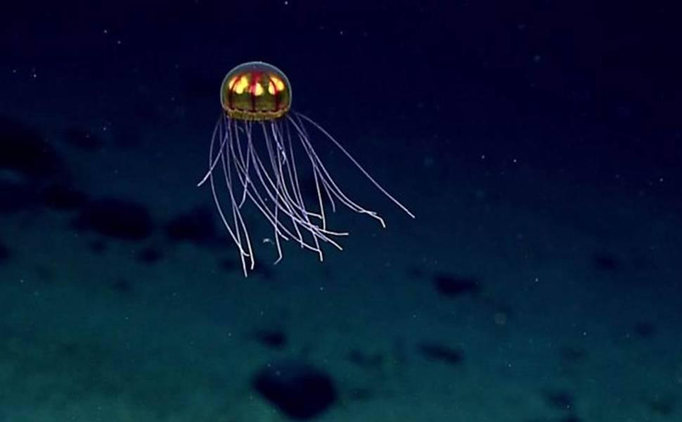 Criaturas bizarras das profundesas do oceano