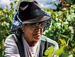 Funcionária trabalha na vindima (a colheita das uvas) na Herdade da Malhadinha Nova, no Alentejo