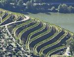 Produção em colina na região do Douro