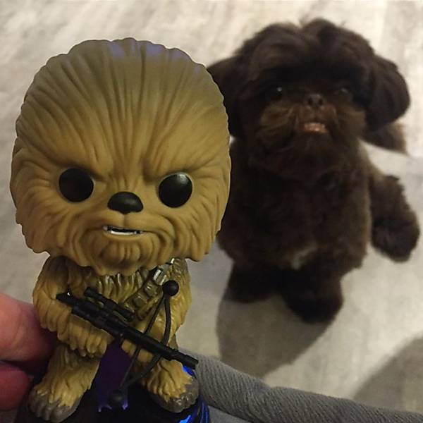 Chewbacca, o cachorro
