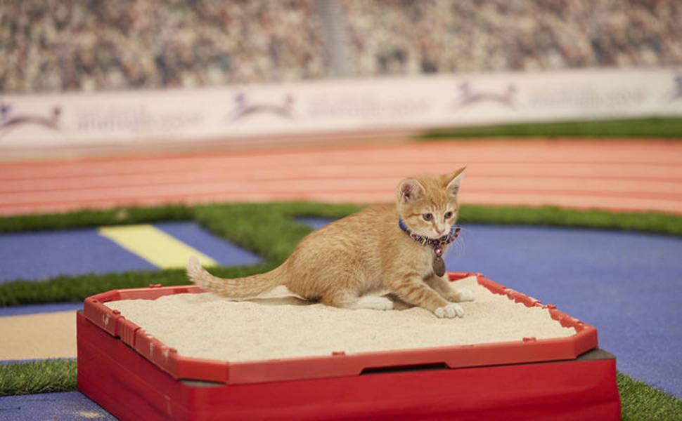 Olimpíada felina