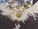 Thaila Ayala desfila pela Gaviões da Fiel no Carnaval 2016