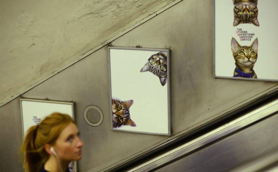 Gatos invadem metrô de Londres