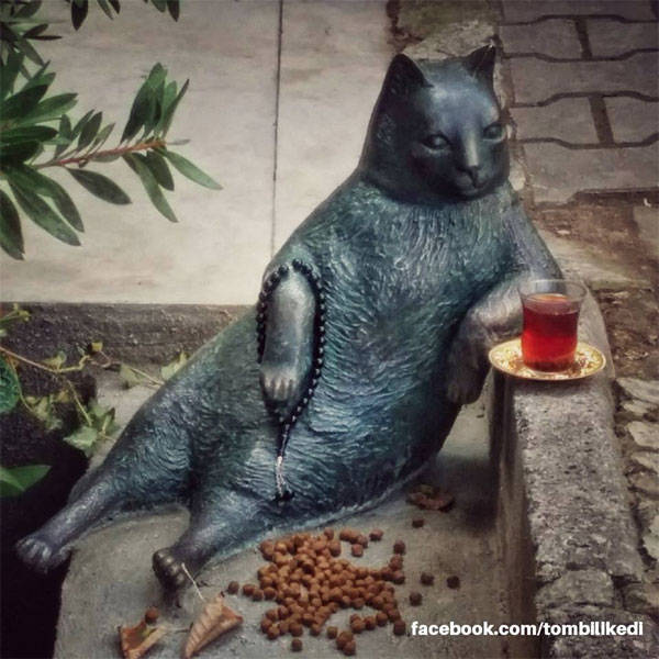 Gato Tombili