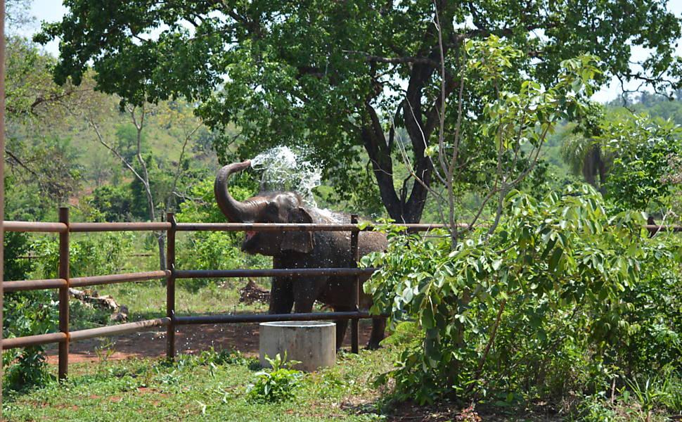 Santuário de elefantes é inaugurado no Brasil