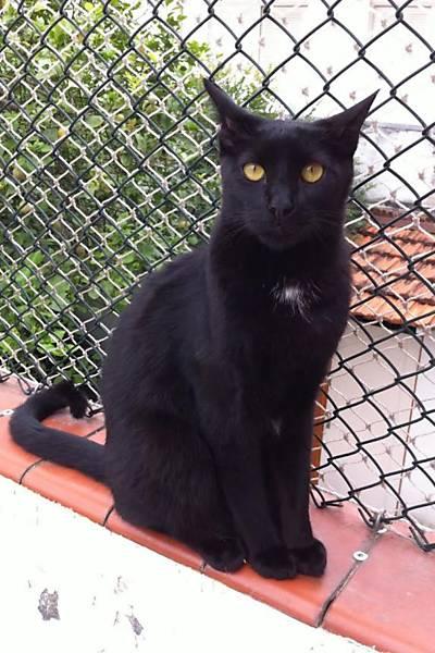 Gatos pretos da ONG MundoGato