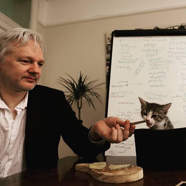 O gato de Julian Assange