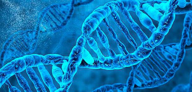 Dos Gregos ao Genoma