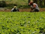 Temer também desistiu de alterar as regras atuais para aposentadoria de trabalhadores rurais, que devem permanecer como estão