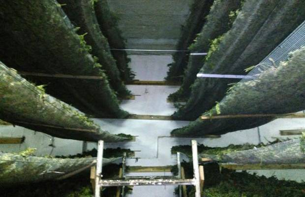 Albânia, o maior produtor de maconha a Europa