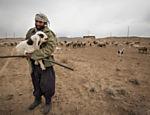 Criador de ovelhas no interior do Irã