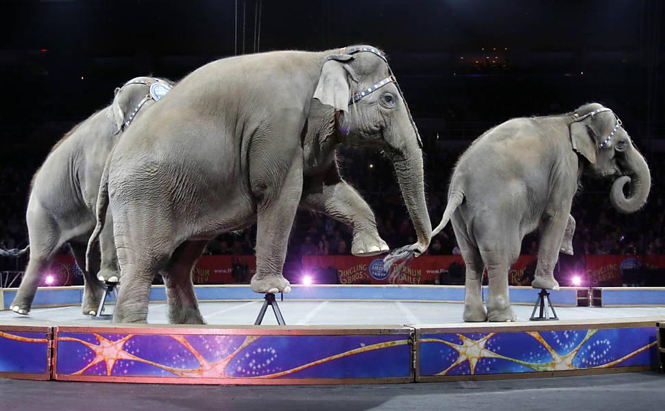 """""""Circo Ringling Bros fecha as portas"""""""