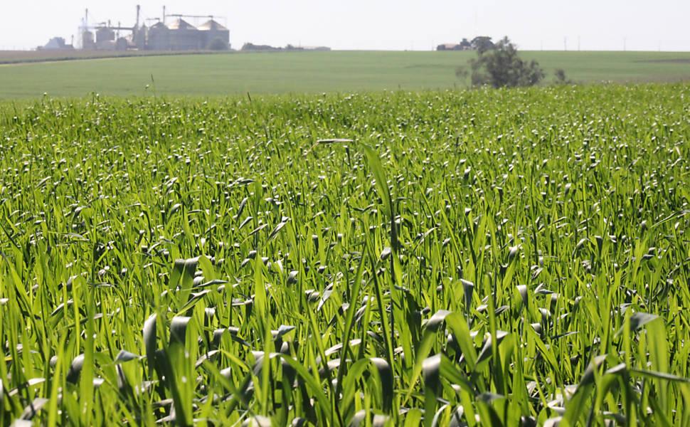 O Brasil que dá Certo - Agronegócio