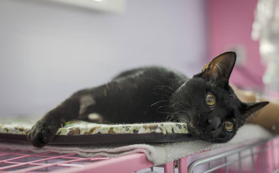 Gato é salvo por vaquinha de moradores de prédio em SP