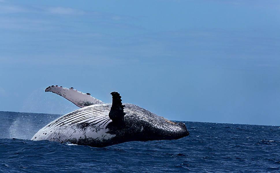Fotógrafo registra baleias e paisagens de Abrolhos