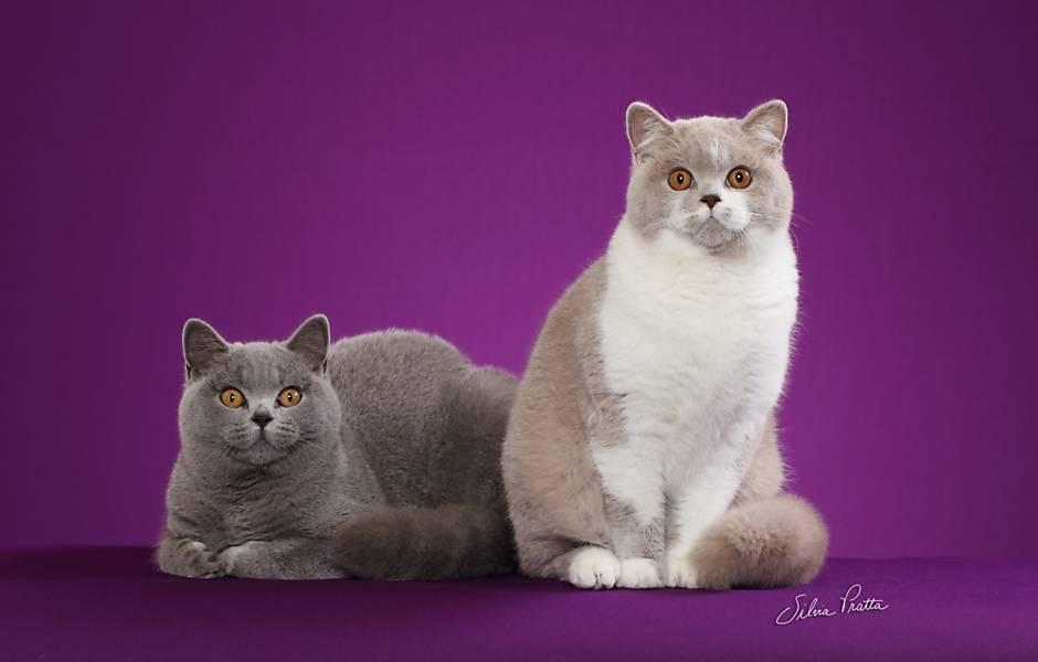 Exposição de gatos em Sorocaba