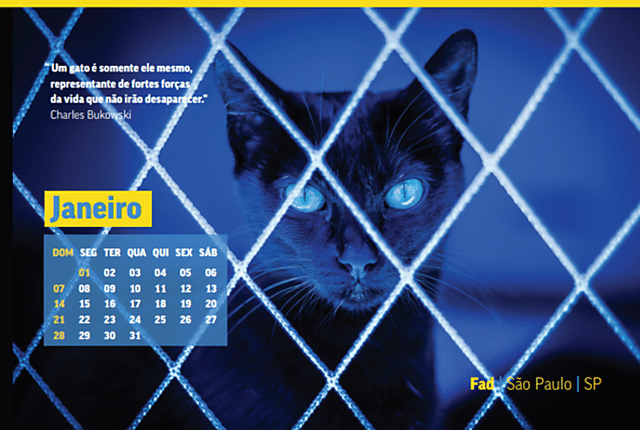 Calendário Felinos Urbanos