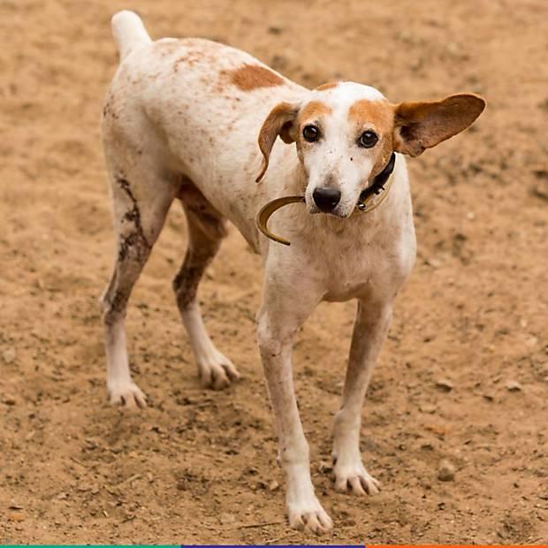 Cães para adoção em Mariana