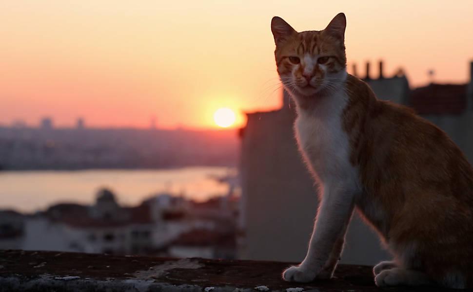 """Filme """"Gatos"""""""