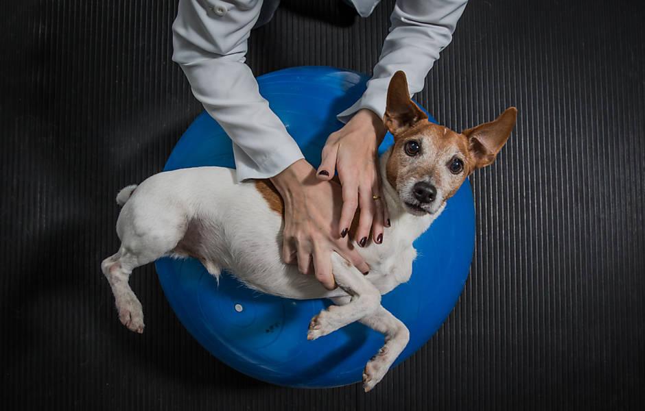 Pets humanizados