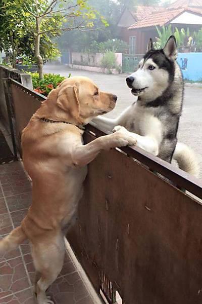 Abraço canino