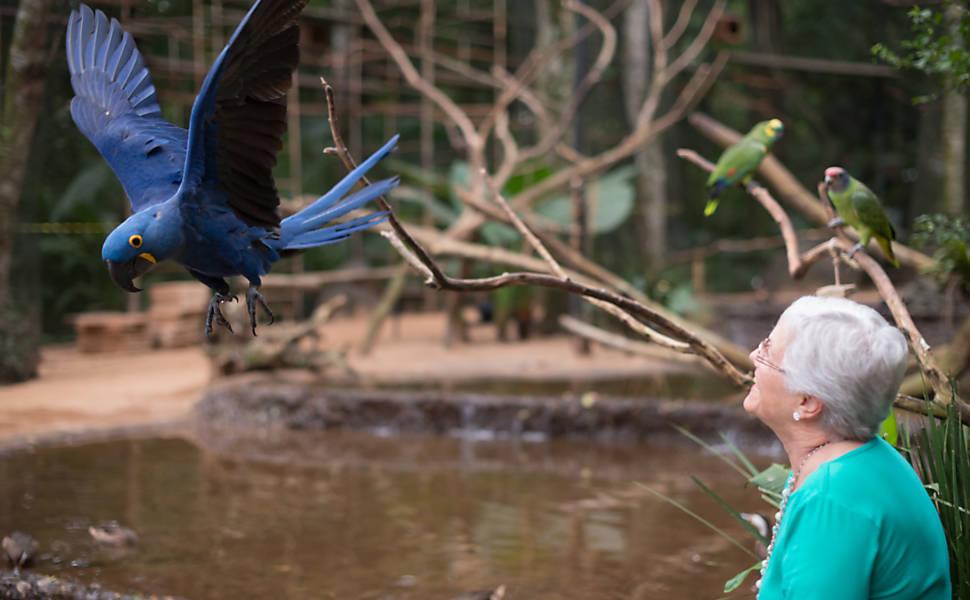 Parque em Foz do Iguaçu abre berçário de aves a visitantes