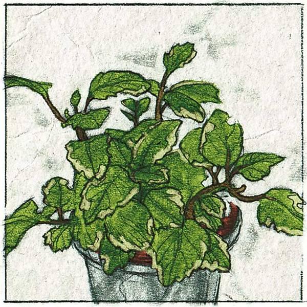 Plantas que umidificam o ar