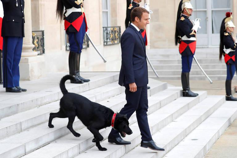 Macron adota cachorro