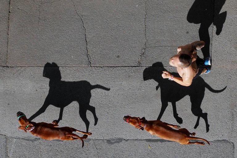 Homem e seus cães correm em Viena, na Áustria