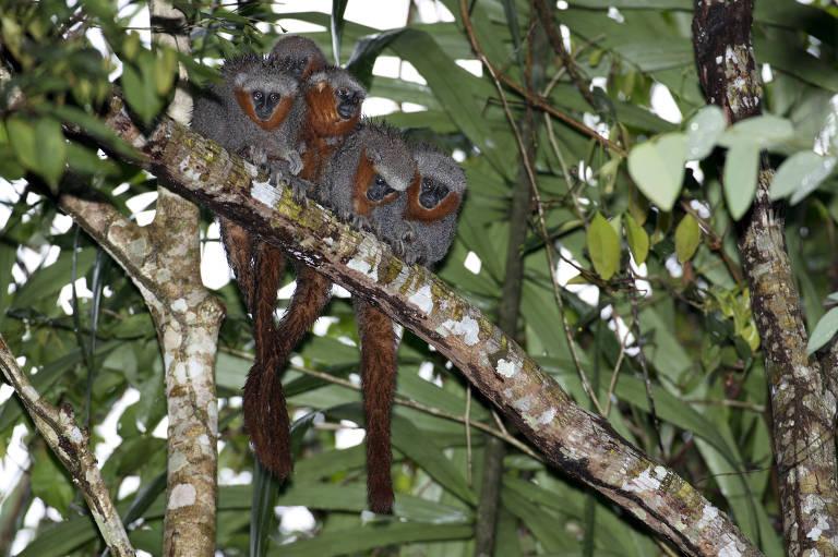 Novas espécies descobertas na Amazônia entre 2014 e 2015