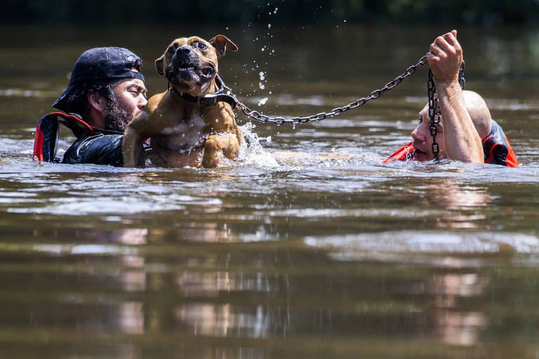 Harvey deixa cães sem casa