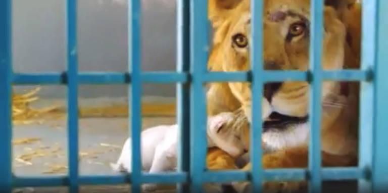 Os animais traumatizados resgatados de ruínas da guerra na Síria