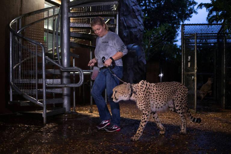 Animais são abrigados no zoo de Miami