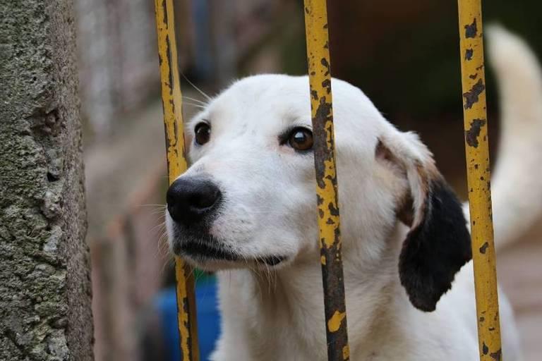 Animais atendidos pelo Cão Sem Fome