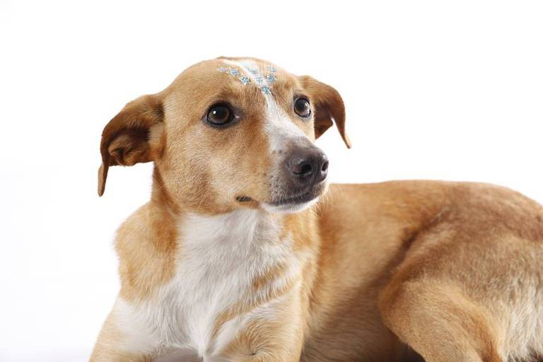Calendário Cão Sem Fome