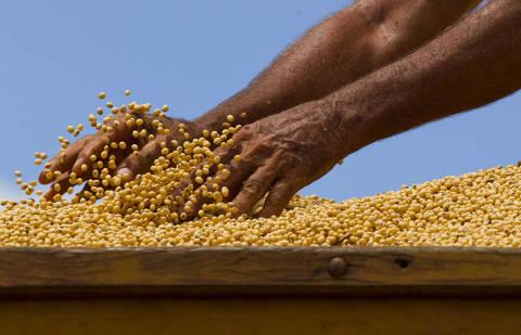 TANGARA DA SERRA, MT, BRASIL, 27-03-2012, 14h30: Caminhoneiro manipula a soja no carregamento durante a colheita do final da safra na fazenda Morro Azul do grupo A. Maggi, que fica ha 70 km do centro de Tangara da Serra, no Mato Grosso. A colheita foi realizada com 17 colheitadeiras Case II, segundo os administradores do grupo A. Maggi, a safra atual deu 60 sacas por hectare num total de 39.400 mil hectare plantado. (Foto: Marcelo Justo/Folhapress, MERCADO)