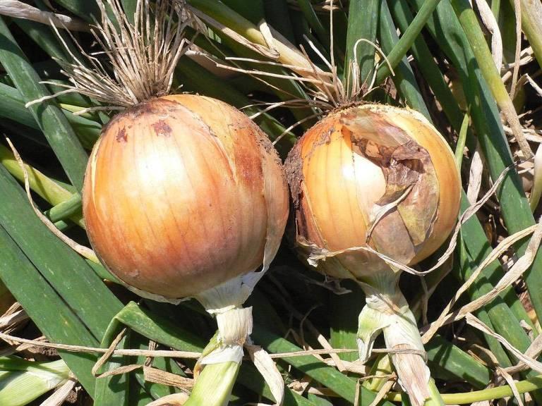 Agronegócio Sustentável