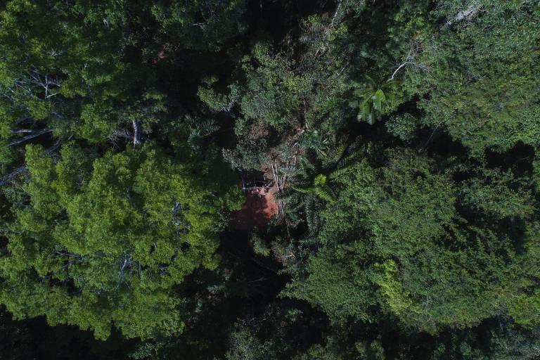 Floresta Estadual do Paru, no Pará, na região da Reserva Nacional do Cobre e Associados (Renca)