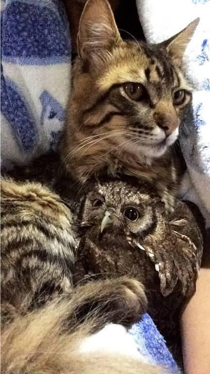 O gato Bartolomeu e a coruja Morgana, que vivem com a estudante de veterinária Debora Bueno