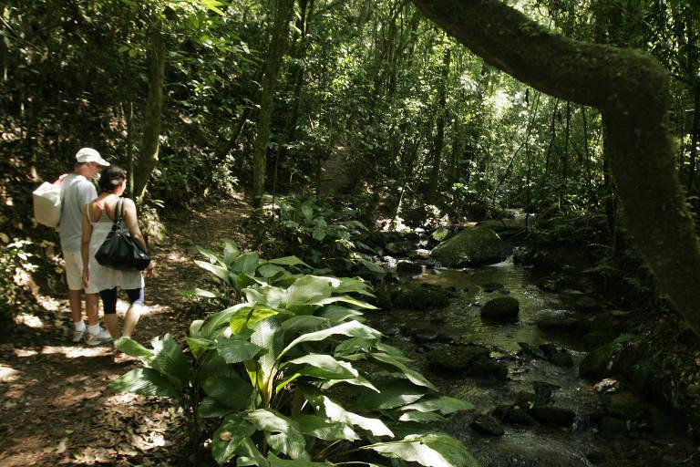 Trilha da Cachoeira, que faz parte do Núcleo Engordador do Parque Estadual da Cantareira