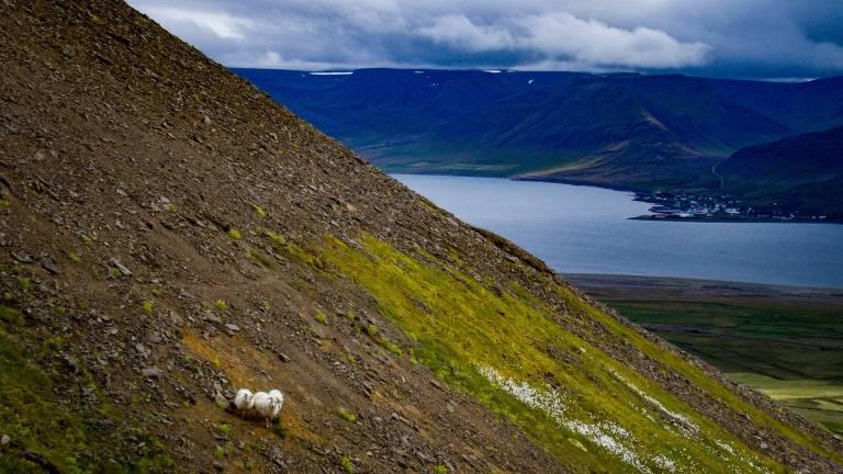 Reflorestamento na Islândia