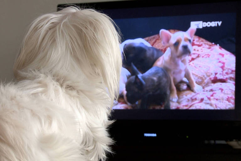 Canal DogTV