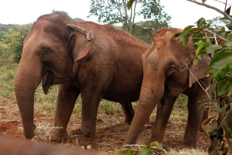 Santuário de elefantes na Chapada dos Guimarães (MT)