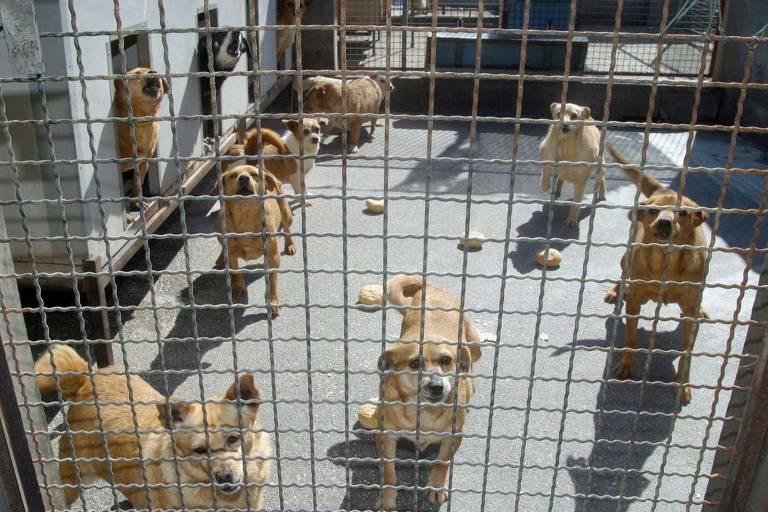 Canil San Giuliano, que cuida de animais abandonados