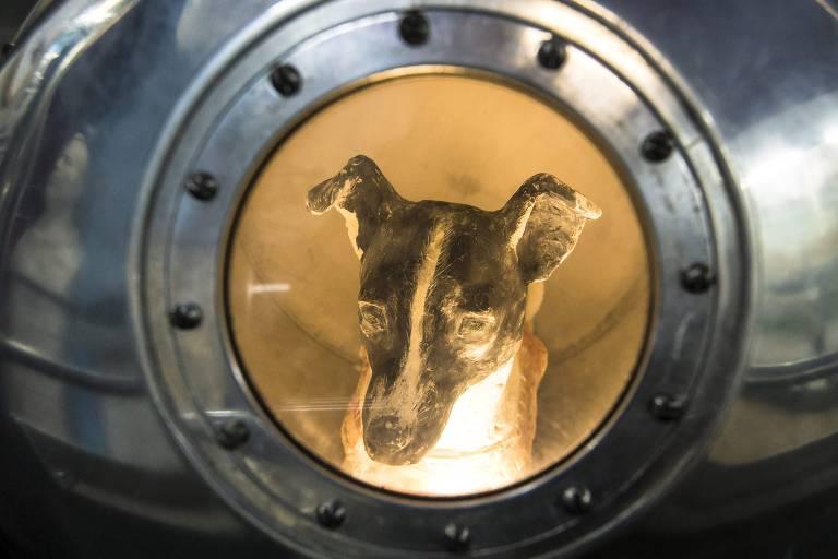 Estátua da cadela laika é vista em janela circular que lembra uma escotilha de barco, com parafusos em volta