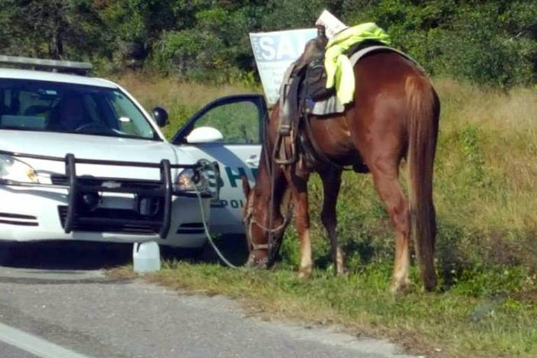 Cavalo que, segundo o xerife de Polk estava cavalgando quando foi presa