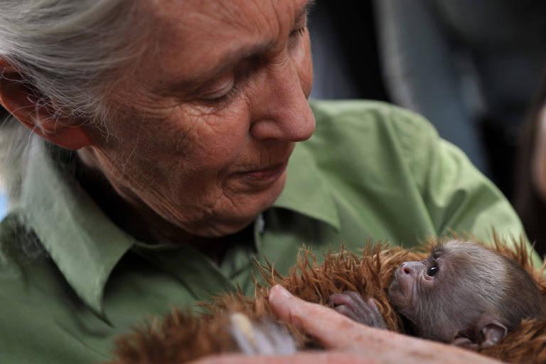 A primatóloga Jane Goodall segura um primata filhote da espécie _Cebus capucinus_