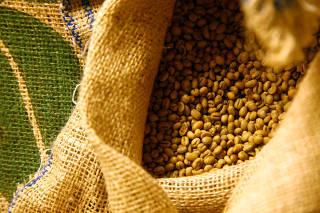 Mineiros avaliam e classificam amostras de café