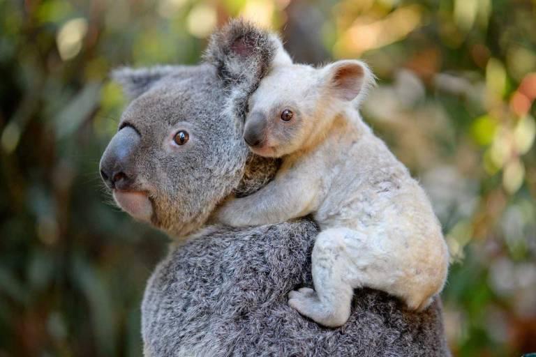 Os bichos fofos da Austrália e alguns nem tão fofos assim