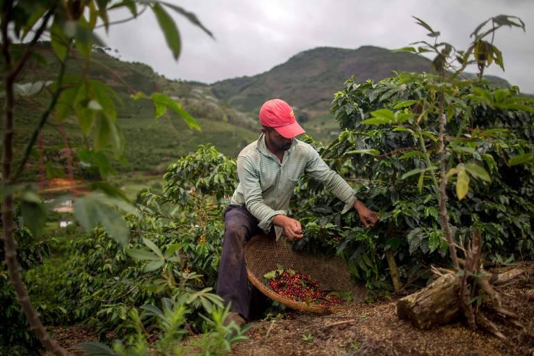 Pequenos produtores investem em caf� especial